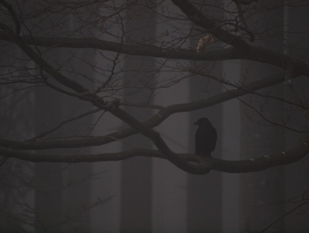 Crow in the Fog