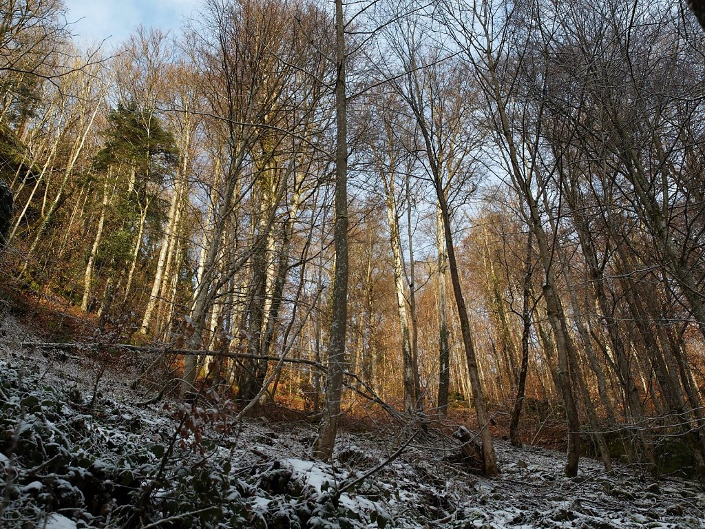 The Forest above Wolfsteiner Ohe