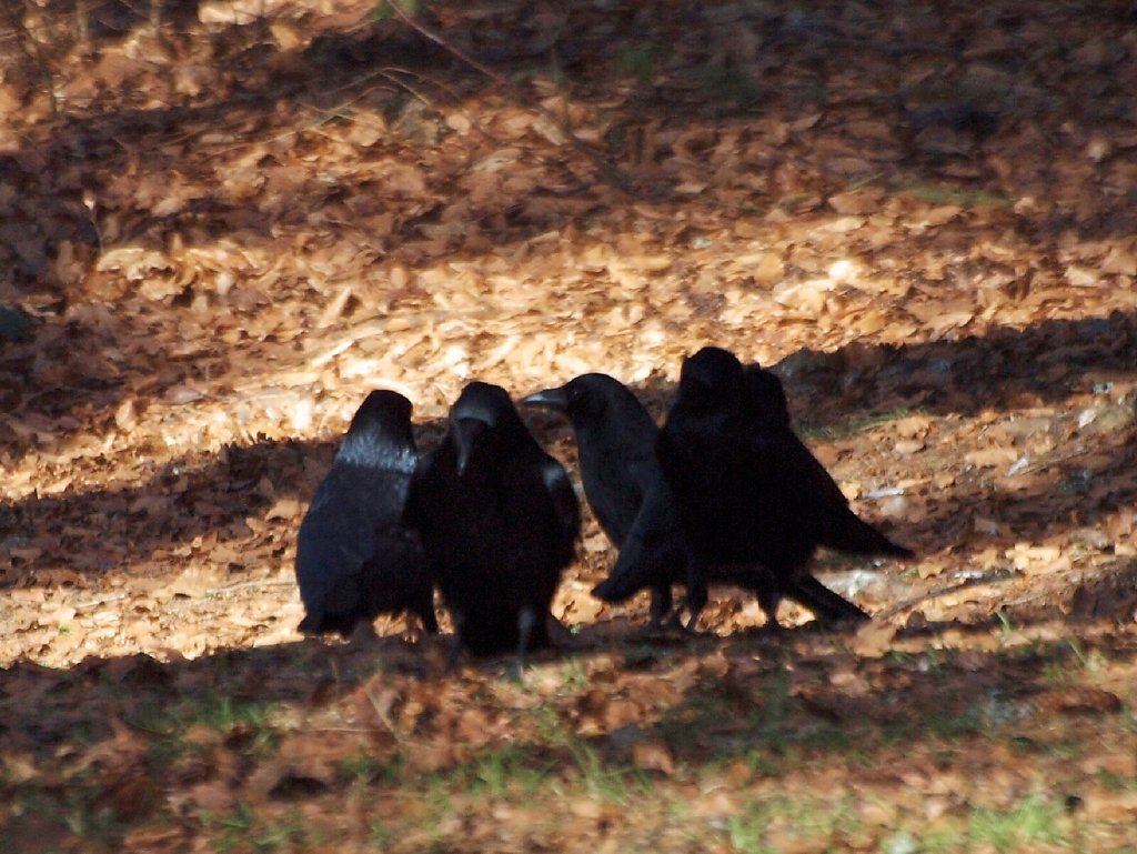 Crow Summit