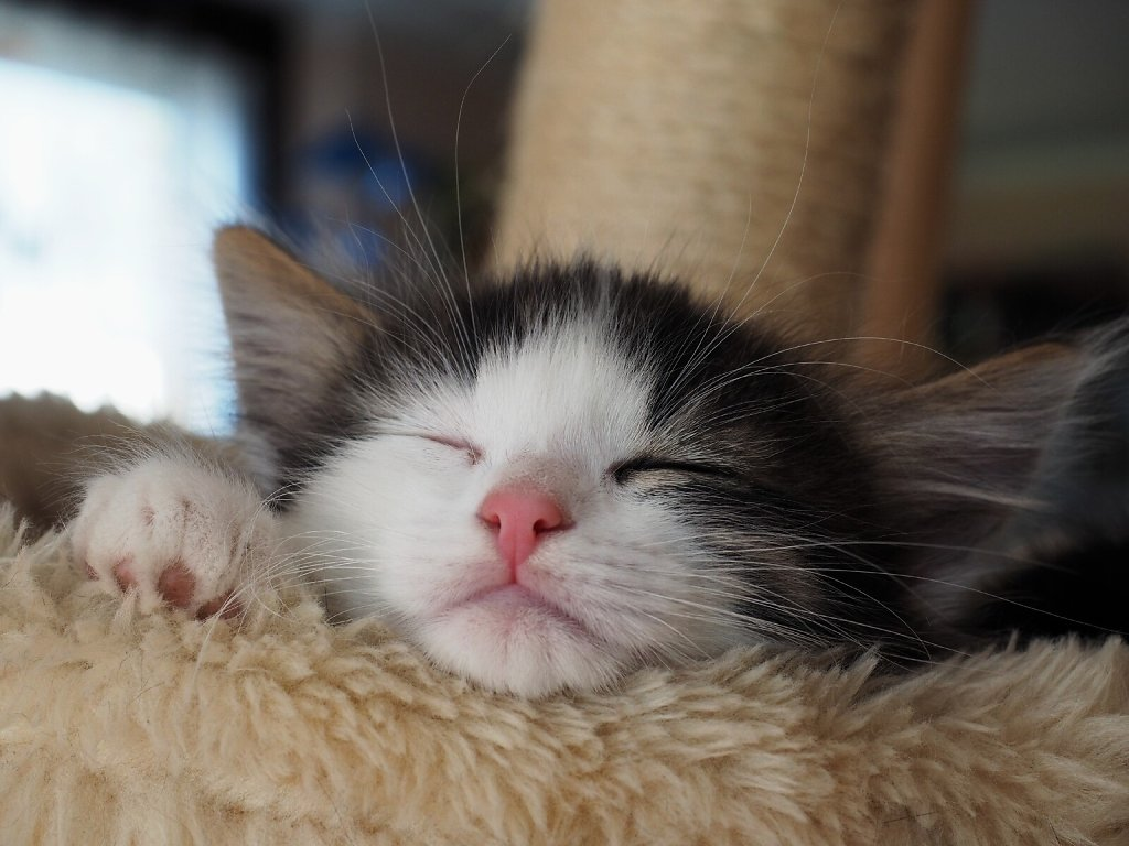 Mimi Fallen in a Deep Sleep